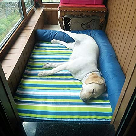 Cama perro Indestructible para Perros medianos/Gatos/Mascotas, Camas perreras Lindas y duraderas para Perritos/Perritos, Azul (Tamaño : 60×45cm): Amazon.es: ...