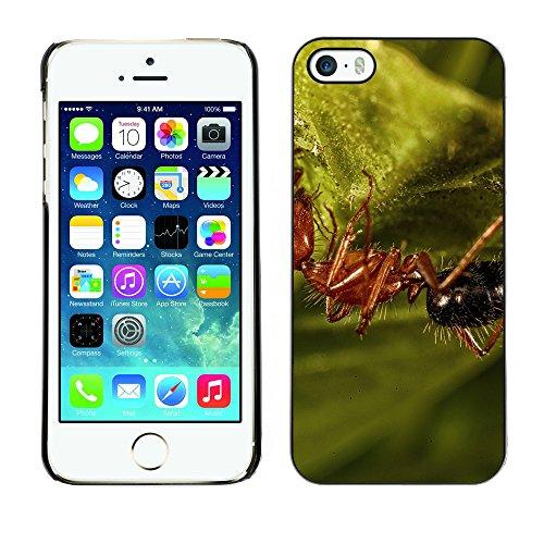 Premio Sottile Slim Cassa Custodia Case Cover Shell // F00012866 fourmi // Apple iPhone 5 5S 5G