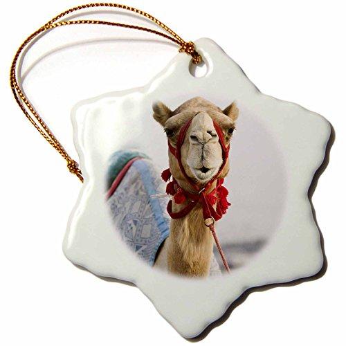 3dRose orn_70914_1 UAE, Dubai, Al Marqadh Dubai Camel Racing Track AS44 WBI0141 Walter Bibikow Snowflake Porcelain Ornament, 3-Inch by 3dRose