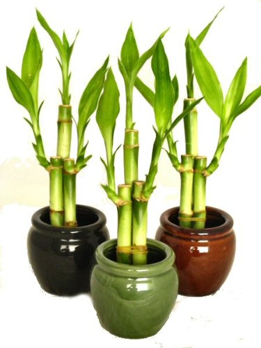 Amazon.com: KL Design & Import - 3 Colors Bamboo Style Mini Ceramic ...