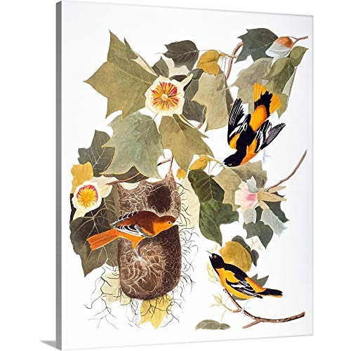 GREATBIGCANVAS Gallery-Wrapped Canvas Entitled Audubon: Oriole by John James Audubon 29