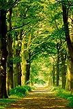 Forest Path Poster Print by Hein Van Den Heuvel, 24x36 Photography Poster Print by Hein Van Den Heuvel, 24x36