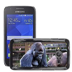 Etui Housse Coque de Protection Cover Rigide pour // M00112068 Gorila Mono Monos Sentado Vida // Samsung Galaxy Ace4 / Galaxy Ace 4 LTE / SM-G313F
