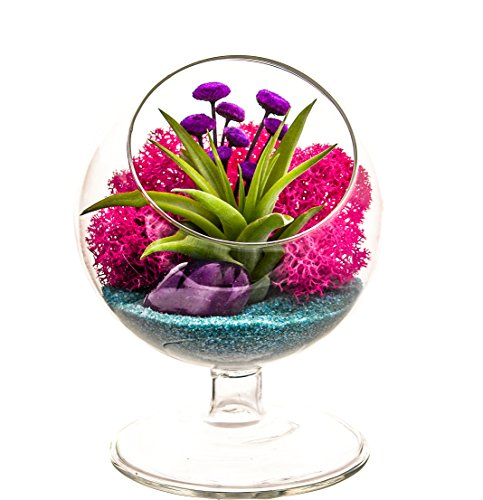 - Bliss Gardens Air Plant Terrarium - 4