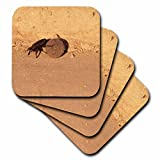 3dRose cst_72699_3 Africa, Namibia, Etosha Np, Dung Beetle Insect-AF31WBI0030-Walter Bibikow-Ceramic Tile Coasters, Set of 4
