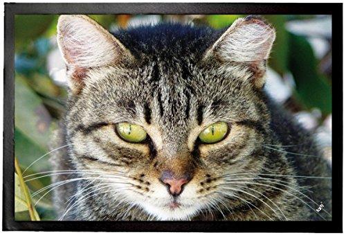 1art1® Gatos - Gata Atigrada, Retrato Felpudo Alfombra (60 x 40cm): Amazon.es: Hogar