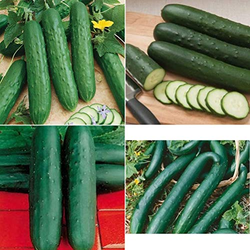 David's Garden Seeds Collection Set Cucumber Slicing GD2123 (Green) 4 Varieties 200 Seeds (Non-GMO, Hybrid)