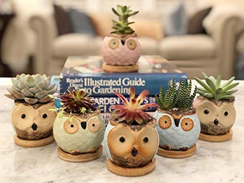 (Chez JuJu Ceramic Owl Succulent Planter | Cute Mini Bonsai Glaze Pot | Perfect Gift for Best Friend Family Birthday Wedding Holiday Kid | Home Office Desktop Indoor Decoration | 6 Pack | Bamboo Saucer)