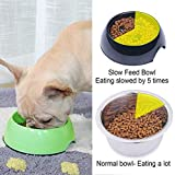 Super Design Anti-Gulping Dog Bowl Slow