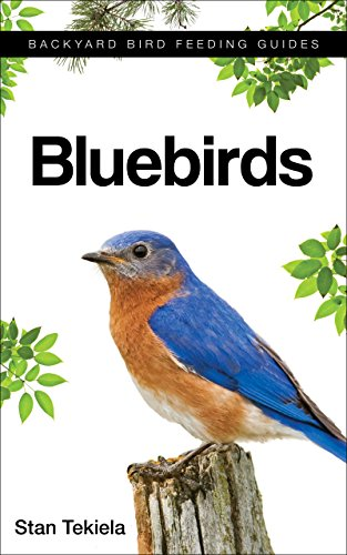 bluebirds-backyard-bird-feeding-guides