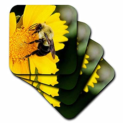 3dRose Danita Delimont - Insects - Carpenter Bee collecting nectar, Kentucky - Coasters