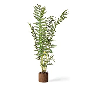 "Sword Fern 32"" Drop-In 48"