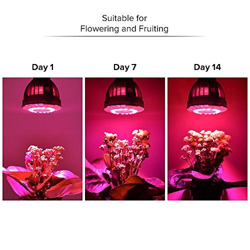 SANSI Flowering LED Grow Light Bulb, Ceramic Plant Light, HydroponiGrowing Light Bulbscs, Indoor Farming, Greenhouses (15w, E26 Socket, 16 LED Chips) by SANSI (Image #4)