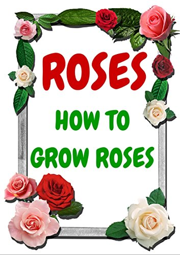 Rose Gardening how to grow roses: ( HOW TO GROW ) ( COLLORS OF ROSES ) ( ROSES GARDENS )