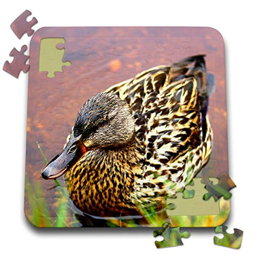 3dRose Stamp City - Bird - Photograph of a Female Mallard Duck Wading at The Edge of a River. - 10x10 Inch Puzzle (pzl_302436_2) ()