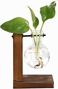 Eyourlife Plant Terrarium Transparent with Wooden Stand Glass Vase Holder Creative Hydroponic Wooden Frame for Coffee Shop Room Decor