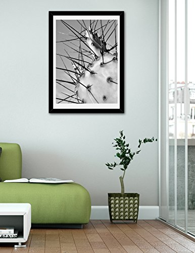 Cactus Print, Black and White Photography, Cactus Thorns Spikes Photo, Fine Art Macro Photography Print, Modern Wall Art Decor, Abstract Picture