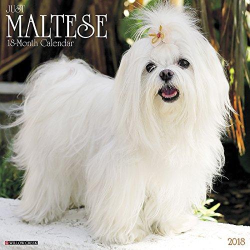 Just Maltese 2018 Calendar
