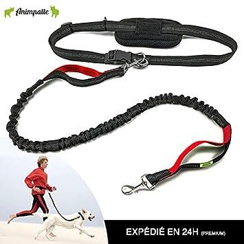 Laisse jogging main libre pour chien ☆ HAUT DE GAMME ☆ EXTENSIBLE jusqu à e75ba4ae7d0