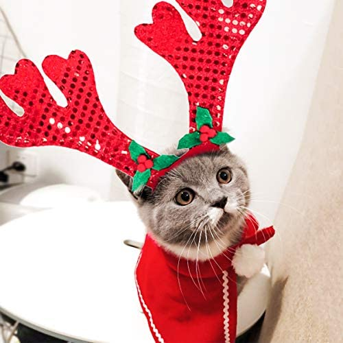 Amazon.com: Cat Costume por Lesypet – Cat Christams manto de ...
