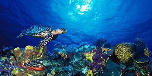 Walls 360 Peel & Stick Wall Murals: Hawksbill Turtle and French Angelfish (24 in x 12 in)