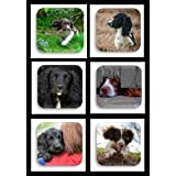 Quality Set of 6 Spaniel Dog Coasters by COUNTRY MATTERS