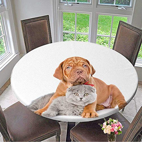 Mikihome Round Premium Tablecloth Bordeaux Puppy Dog embracing Gray cat Isolated on White Background Stain Resistant 31.5