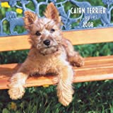 Cairn Terrier Puppies 2008 Mini Wall Calendar (German, French, Spanish and English Edition)