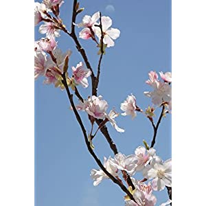 "Richland Cherry Blossom Branches Tall Silk Pink 42"" Set of 6 113"