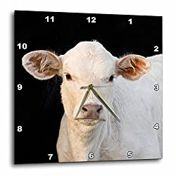 3D Rose dpp_94511_3 3dRose Charolais Calf, Cow, Welder Ranch, Texas-US44 MPR0037-Maresa Pryor-Wall Clock 15-inch
