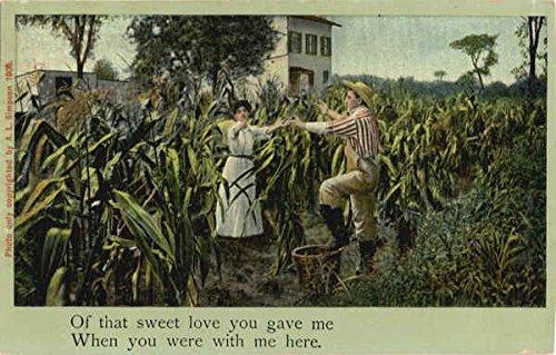 Farmer Couple Dancing in Cornfield Farming Original Vintage Postcard ()