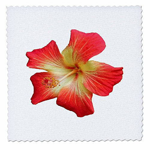 3dRose Taiche - Photography - Hibiscus - Gorgeous Red And Gold Hawaiian Hibiscus Flower - 20x20 inch quilt square (Gold Hawaiian Quilt)