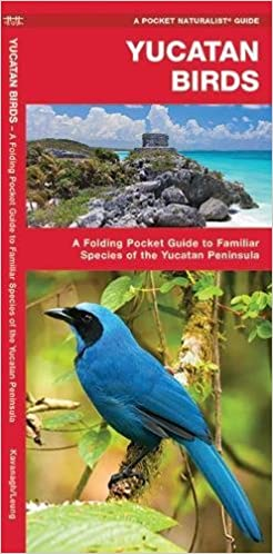 Yucatan Birds A Folding Pocket Guide To Familiar Species Of The Peninsula Naturalist James Kavanagh Waterford Press