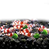 LUFFY Shrimp Balls - Instantly Purify Water for Shrimps: Beautiful & Easy Live Plant: Provide Micro-nutrients for Shrimps to Feed on