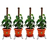 Trust Basket Metal Pot Stands (Black, Pack of 4)