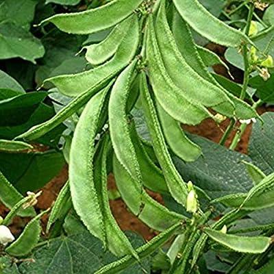 semphali agri is-12 Seeds (avg 50-100) Seeds 10 : Garden & Outdoor