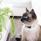 Pettsie Cat Collar Breakaway & Matching Friendship