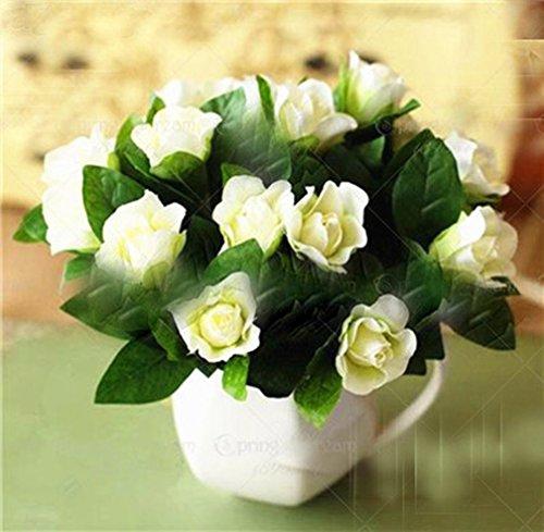 (100 pcs/Bag Gardenia Seeds (Cape Jasmine) Amazing Smell & Beautiful Flower Seeds Tree Seeds for Home Garden Plant )
