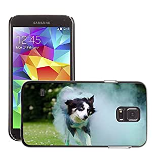 GoGoMobile Slim Protector Hard Shell Cover Case // M00119355 Border Collie Holi Colour Dog // Samsung Galaxy S5 S V SV i9600 (Not Fits S5 ACTIVE)
