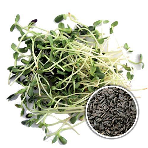 250 g BIO Keimsprossen Sonnenblume Samen für die Sprossenanzucht Sprossen Microgreen Mikrogrün Saatzucht Bardowick
