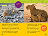 National Geographic Readers: Squeak! (L3): 100 Fun