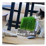 Foliage plant seeds wheat grass, cat grass seeds, wheat seeds,200 seeds/bag