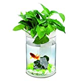 Aquaponic Transparent Aquarium, Remote Control Colorful LED Betta Fish Tank, with Air pump, filtration system, Intelligence Micro 360°Landscape Aquaponics Ecosystem for DIY Home Office Decoration