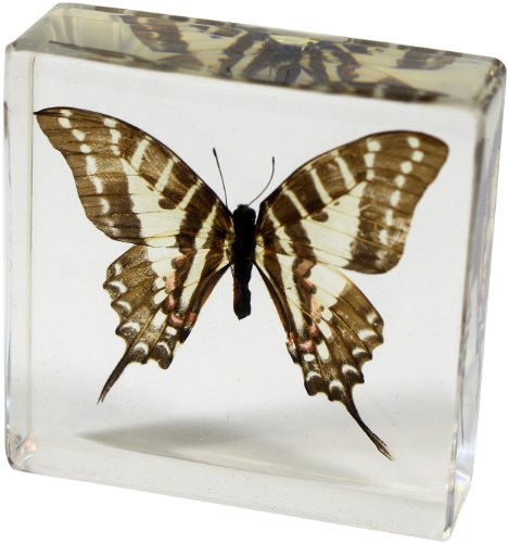 Swallowtail Butterfly Pictures - REALBUG Swallowtail Butterfly Paperweight(3x3x1)