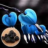 BigFamily 10 Teile / beutel Mehrjährige Kräuter Dicentra Pflanze Tränendes Herz Blumensamen Kreative