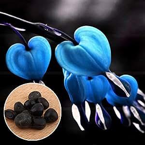 BigFamily 10 Unids/bolsa Hierbas Perennes Dicentra Planta Sangrado Semillas de Flores de Corazón Creativo