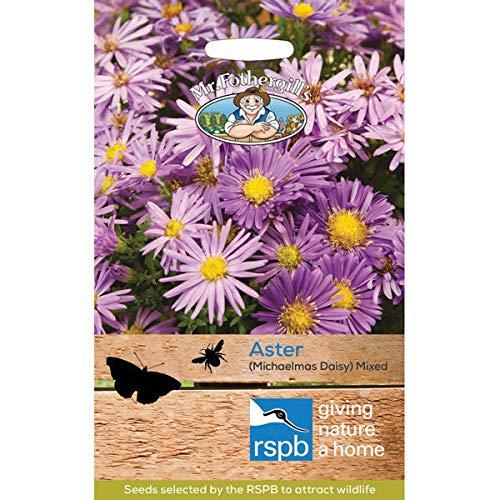 Casavidas Seeds Package: Mr Fothergill'S Aster (Michaelmas Daisy) ()