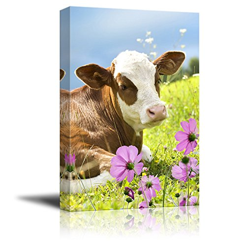 wall26 Canvas Print Wall Art - Cattle Lying on Grass with Purple Flowers - Gallery Wrap Modern Home Decor | Ready to Hang - 32x48 inches ()