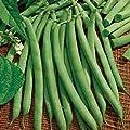 David's Garden Seeds Bean Bush Commodore Improved BB798453 (Green) 100 Heirloom Seeds