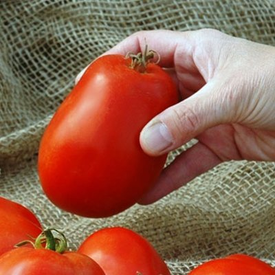 Tomato Pony Express F1 - Vegetable Seeds Package - 500 Seeds